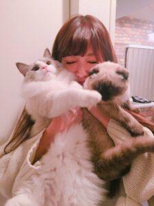 ひなんちゅと猫の画像