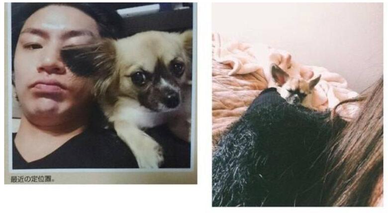 横尾渉の愛犬画像