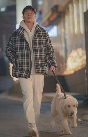 ウィハジョンの犬の散歩画像